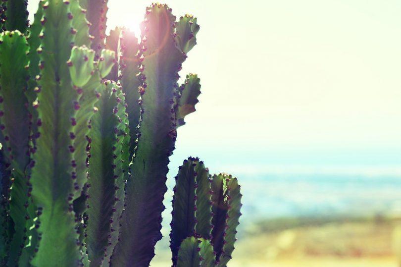 4 visitas imprescindibles si estás pensando en viajar a las Islas Canarias