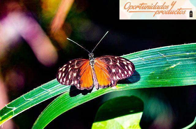 Proyectos de la Fundación Biodiversidad