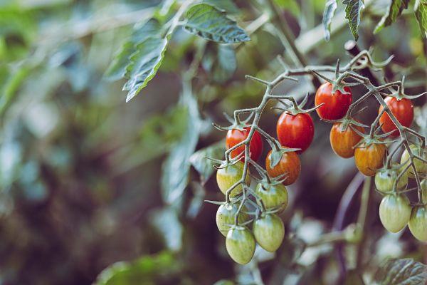 Caña Nature productos 100% Granadinos